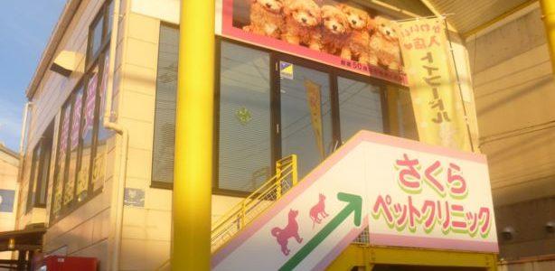 おめでとうございます!! ペットショップ カネユキ(多治米町)では  新年プードルちゃん 祭り!!開催中! かわいい かわいい わんちゃんが6万円~ みんな 見に行こう! (カネユキスタッフブログにワ ンちゃん掲載!!) […]