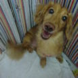 トリミング教室のカット犬 募集中です!! 小型犬 3,000円 中型犬 3500円~  (税別) ※お気軽に お問い合わせください!! ※ 噛みつき、おおもつれ,大きさ 等はプラス料金が発生します。 先生が仕上げを致しま […]